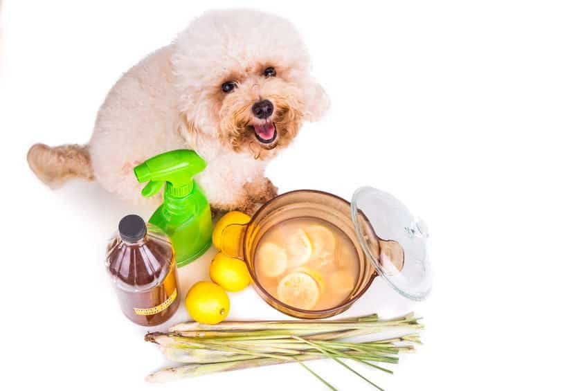 home remedies for dog