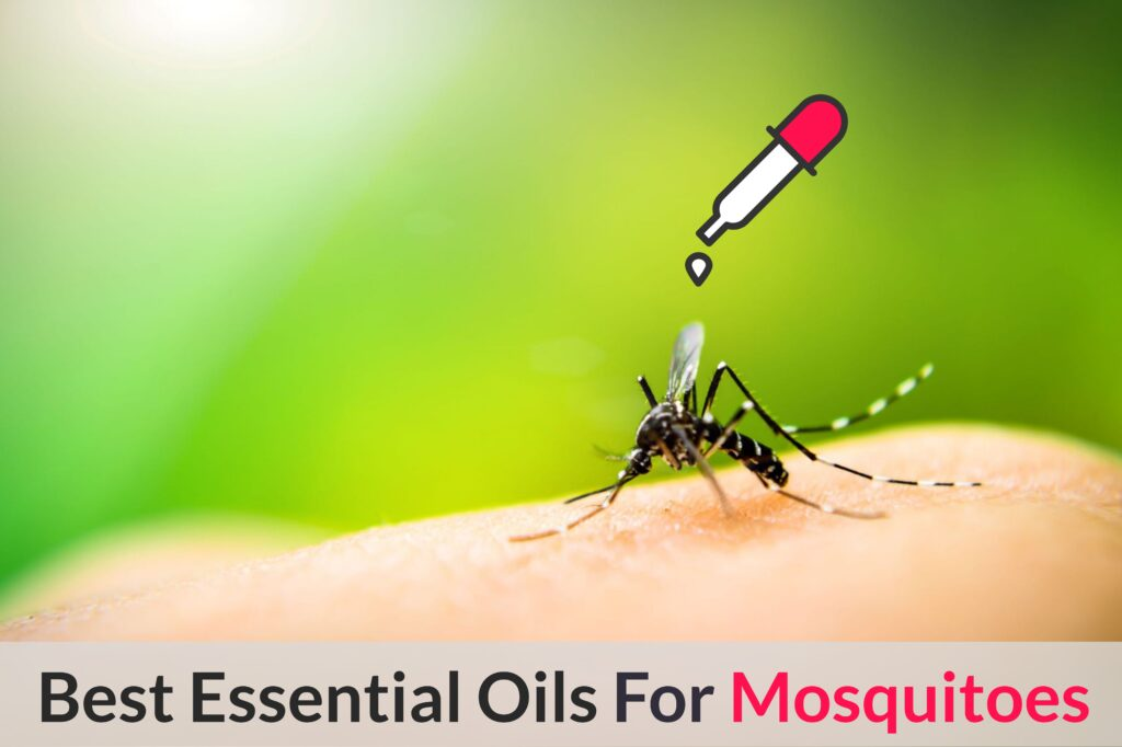 What Are The Best Essential Oil Recipes And Natural Homemade Remedies For Mosquito Bites, Repellent and Control Essential Oil Benefits