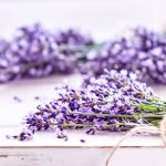 Essential Oils For Fleas: How To Get Rid of Fleas And Their Bites For Good
