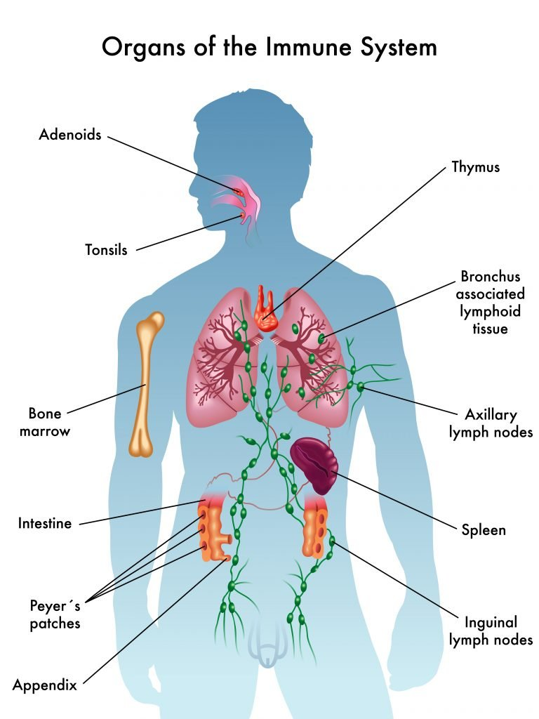 Essential Oils For The Immune System Essential Oil Benefits