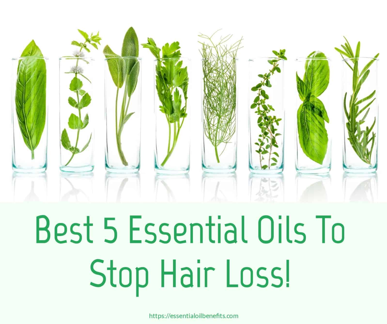 Essential Oils For Hair Loss, Hair Thinning And Alopecia