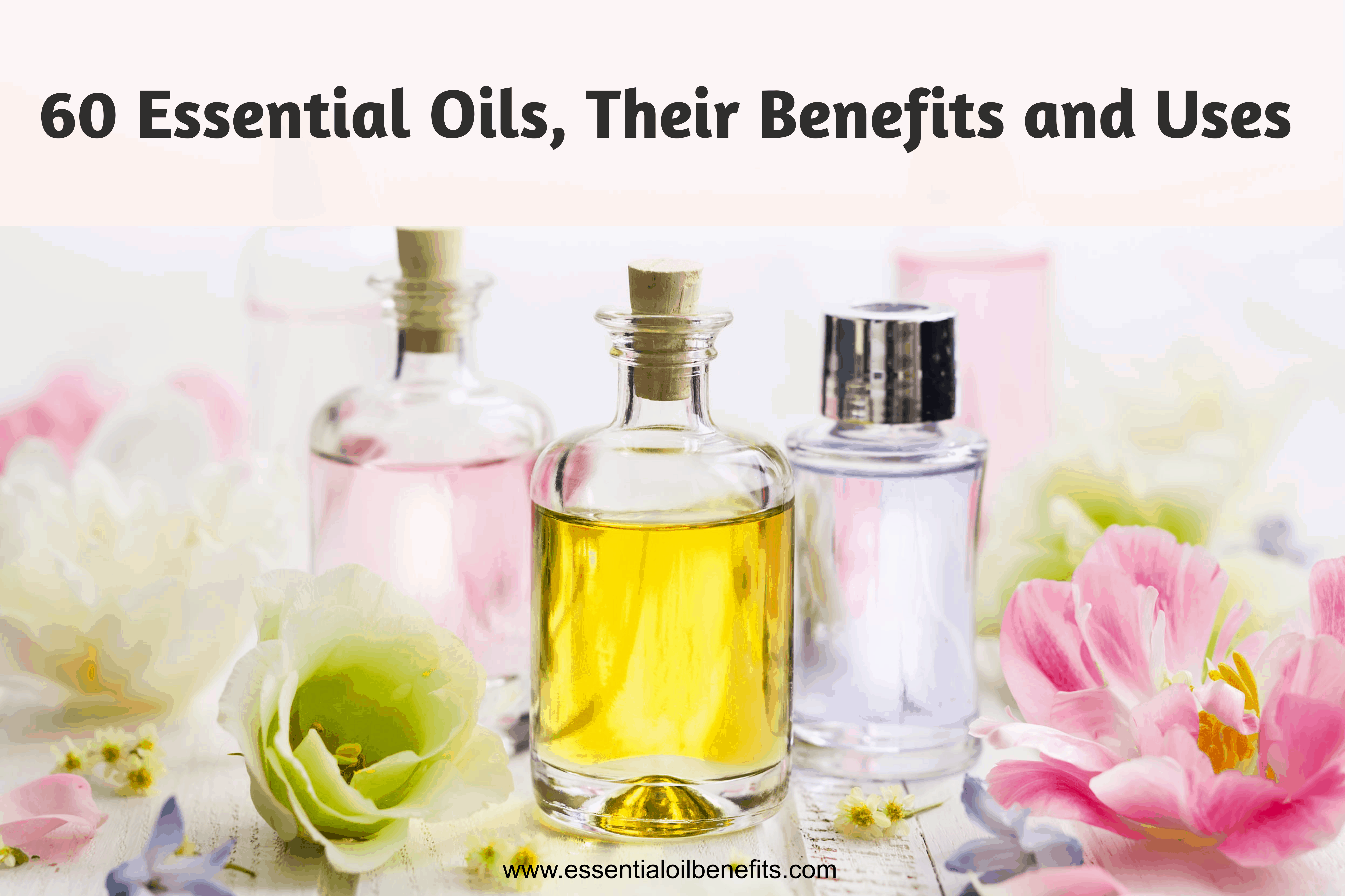 This is a picture of Modest Printable List of Essential Oils and Their Uses