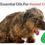 best essential oils for kennel cough